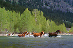 Open range horses, Methow Valley, Washington
