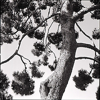 Tree<br />
