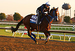 Mr. Money, trained by trainer W. Bret Calhoun, exercises in preparation for the Breeders' Cup Dirt Mile at Keeneland Racetrack in Lexington, Kentucky on November 5, 2020.
