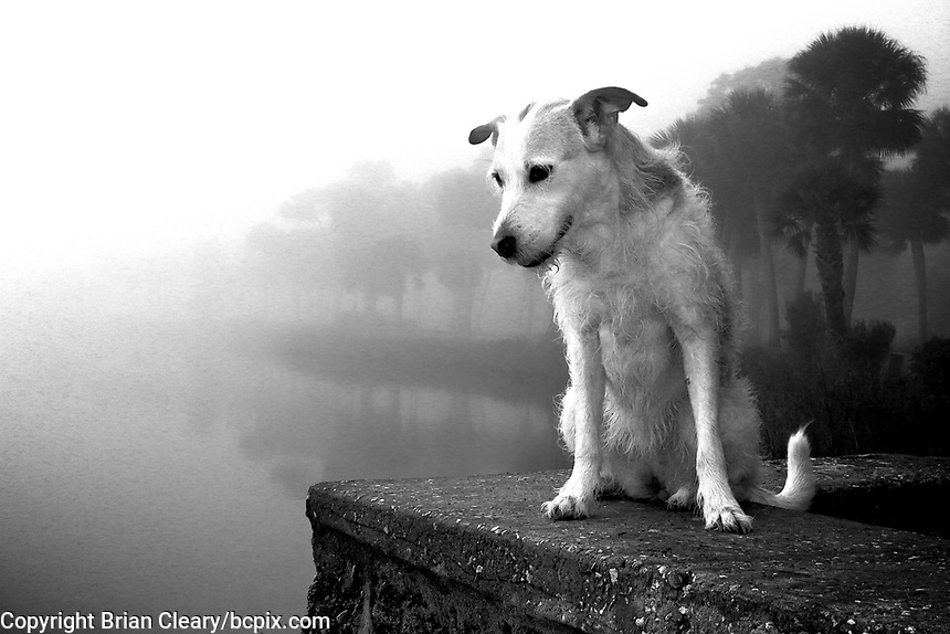 Willow the dog looks out at the Halifax River in Ormond Beach, Florida on a foggy February morning.  (Photo by Brian Cleary/www.bcpix.com)
