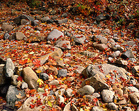 River bed in fall color along the Pemigewassett River; White Mountains National Forest, NH