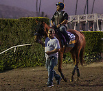 OCT 28: Breeders' Cup Distaff entrant Blue Prize, trained by Ignacio Correas, at Santa Anita Park in Arcadia, California on Oct 28, 2019. Evers/Eclipse Sportswire/Breeders' Cup