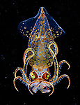 Glass-like sea creatures just millimetres big, found in black water byYung-Sen Wu
