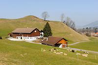 Bergwiesen bei Ofterschwang im Allgäu, Bayern, Deutschland<br /> mountain pasture near Ofterschwang , Allgäu, Bavaria, Germany