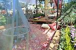Parque Araucano / Exposición de las rosas / Santiago de Chile.<br /> <br /> Edición de 3 | Víctor Santamaría.