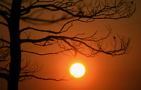 Pictured: The sun rises through burned tree brunches.<br /> Re: A forest fire has been raging in the area of Kalamos, 20 miles north-east of Athens in Greece. There have been power cuts, country houses burned and children camps evacuated from the area.