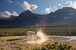 Canadian Rockies: Banff & Jasper National Park, August 2011