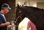 LOUISVILLE, KY - APRIL 27: Tom's Ready (More Than Ready x Goodbye Stranger, by Broad Brush) is fed an apple outside his stable by his groom at Churchill Downs, Louisville, KY. (Photo by Mary M. Meek/Eclipse Sportswire/Getty Images)
