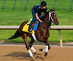 Alpha , trained by Kiaran McLaughlin and to be ridden by Rajiv Maragh, works out in preparation for the 138th Kentucky Derby at Churchill Downs in Louisville, Kentucky on May 3, 2012