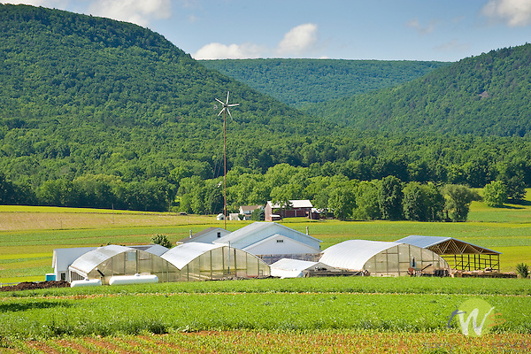 Country Acres Greenhouses, Nippenose Valley, PA.