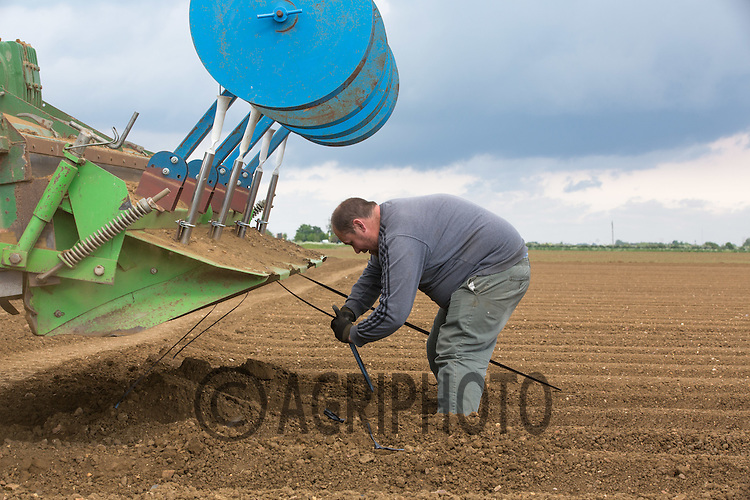 Laying drip tape irrigation in potatoes <br /> Picture Tim Scrivener 07850 303986<br /> tim@agriphoto.com<br /> ….covering agriculture in the UK….