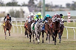 HALLANDALE BEACH, FL - JAN 20:Galleon Mast #5 with Irad Ortiz Jr. on board for trainer David Fawkes leads the field in the $150,000 Sunshine Millions Turf Stakes at Gulfstream Park on January 20, 2018 in Hallandale Beach, Florida. (Photo by Bob Aaron/Eclipse Sportswire/Getty Images)