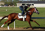 LOUISVILLE, KY - APRIL 16: Oscar Nominated (Kitten's Joy x Devine Actress, by Theatrical) works four furlongs in :49 3/5 with exercise rider Joel at Churchill Downs' Trackside Training Center in Louisville, Kentucky. He is owned by Kenneth L. and Sarah K. Ramsey and trained by Michael J. Maker.  (Photo by Mary M. Meek/Eclipse Sportswire/Getty Images)