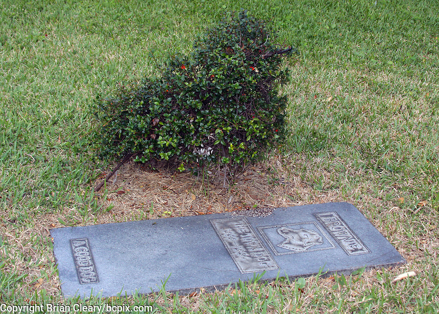 """A monument to """"Brownie"""", the """"Town Dog"""" of Daytona Beach, FL from 1939 to 1954, located on Beach Street in downtown Daytona Beach, FL.  The bush behind the marker used to be a topiary of a dog, but has gone untended for some time.   (Photo by Brian Cleary/www.bcpix.com)"""