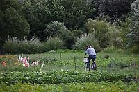 Europe/France/Poitou-Charentes/79/Deux-Sèvres/Marais Poitevin/ Le Vanneau-Irleau : Les jardins maraîchers dans le marais mouillé