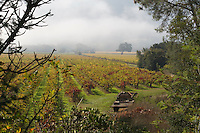 Fall Colors in Wine Country, 2012