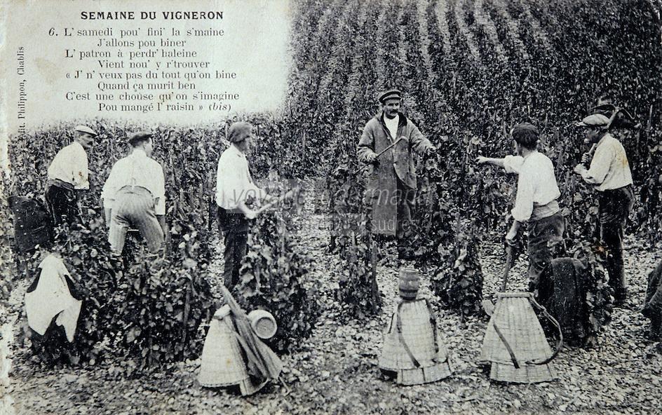 Europe/France/89/Yonne/AOC Chablis: Carte postale ancienne les vendanges