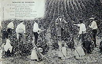 Europe/France/89/Yonne/AOC Chablis : Carte postale ancienne les vendanges