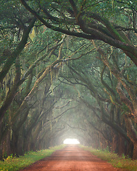 The oak lined road of historic plantation homes on a foggy morning outside New Orleans.