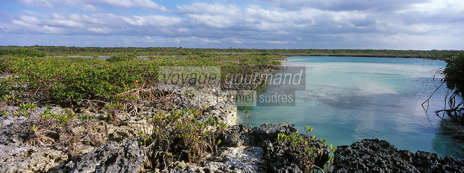 Iles Bahamas /Ile d'Andros/South Andros: la Mangrove et un trou bleu, puits profond dans le récif coralien //  Bahamas Islands / Andros Island / South Andros: the Mangrove and a blue hole, deep well in the coral reef