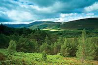Carn Dearg Mor and Glen Feshie, Cairngorm National Park