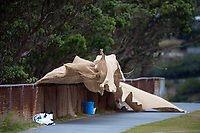 The wind blows during the Pearce Cup Wellington men's cricket match between Johnsonville and Hutt Districts at Alex Moore Park in Johnsonville, New Zealand on Saturday, 6 March 2021. Photo: Dave Lintott / lintottphoto.co.nz