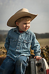 Calf marking at the Wooster Ranch, Red Barn, Calaveras County, Calif...Wesley