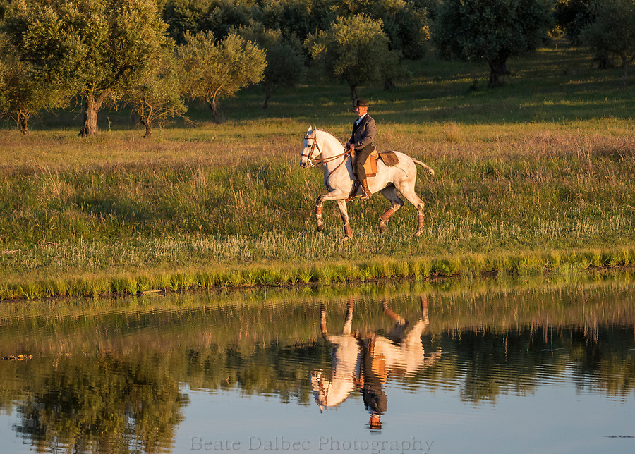 rider at Monte Barrao studfarm, Alentejo, Portugal