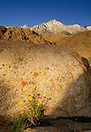 Lone Pine Peak, Alabama Hills, Sierra Nevada Mountains, California
