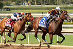 """ARCADIA, CA  SEPTEMBER 29:  #3 Paradise Woods, ridden by Abel Cedillo, in the stretch of the Zenyatta Stakes (Grade ll) """"Win and You're In Breeders' Cup Distaff Division, on September 29, 2019 at Santa Anita Park in Arcadia, CA.<br /> (Photo by Casey Phillips/Eclipse Sportswire/CSM"""