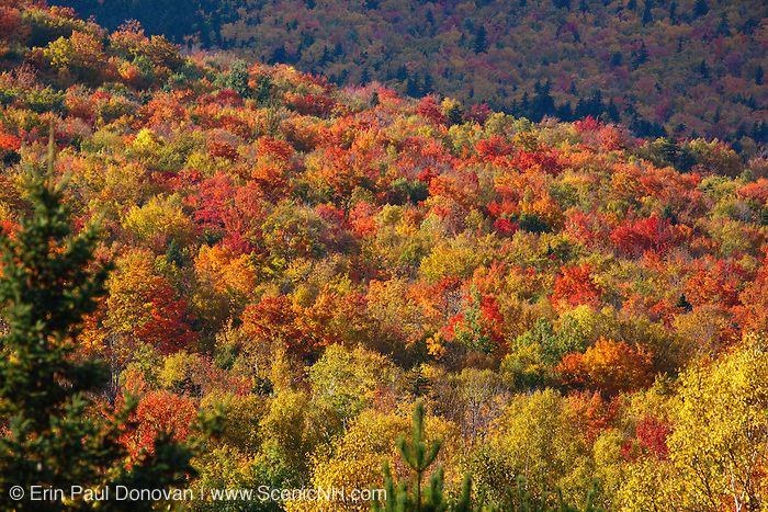 Mount Washington Valley - Forest in Pinkham Notch during the autumn months in Green's Grant, New Hampshire USA.