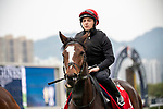 SHA TIN, HONG KONG – December 5: Magic Wand at trackwork on December 5 at Sha Tin Race Course in Hong Kong before starting in the Longines Hong Kong Cup. Michael McInally/Eclipse Sportswire/CSM