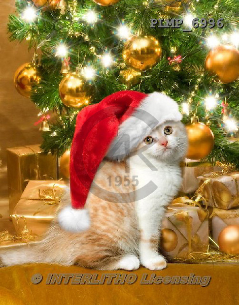 Marek, CHRISTMAS ANIMALS, WEIHNACHTEN TIERE, NAVIDAD ANIMALES, photos+++++,PLMP6996,#XA# cat  santas cap,