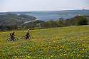 09/05/16 <br /> <br /> Cyclists, Karen and Gary Truelove stop to admire the stunning filed of golden dandelions overlooking Carsington Water, near Ashbourne in the Derbyshire Peak District.<br /> <br /> <br /> <br /> <br /> All Rights Reserved: F Stop Press Ltd. +44(0)1335 418365   +44 (0)7765 242650 www.fstoppress.com