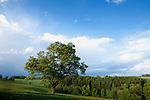 Europa, DEU, Deutschland, Nordrhein Westfalen, NRW, Bergisches Land, Oberbergisches Land, Reichshof , Typische Landschaft, Baum, Alte Eiche im Abendlicht, Kategorien und Themen, Natur, Umwelt, Landschaft, Jahreszeiten, Stimmungen, Landschaftsfotografie, Landschaften, Landschaftsphoto, Landschaftsphotographie, Tourismus, Touristik, Touristisch, Touristisches, Urlaub, Reisen, Reisen, Ferien, Urlaubsreise, Freizeit, Reise, Reiseziele, Ferienziele<br /> <br /> [Fuer die Nutzung gelten die jeweils gueltigen Allgemeinen Liefer-und Geschaeftsbedingungen. Nutzung nur gegen Verwendungsmeldung und Nachweis. Download der AGB unter http://www.image-box.com oder werden auf Anfrage zugesendet. Freigabe ist vorher erforderlich. Jede Nutzung des Fotos ist honorarpflichtig gemaess derzeit gueltiger MFM Liste - Kontakt, Uwe Schmid-Fotografie, Duisburg, Tel. (+49).2065.677997, archiv@image-box.com, www.image-box.com]
