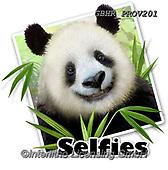 Howard, SELFIES, paintings+++++,GBHRPROV201,#Selfies#, EVERYDAY ,panda,pandas