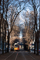 Milano, corsia alberata riservata ai tram in via Mac Mahon --- Milan, tree-lined lane reserved to tram in Mac Mahon street