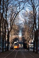 Milano, corsia alberata riservata ai tram in via Mac Mahon --- Milan, tree-lined lane reserved to tram in Mac Mahon street