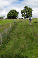 Cumbria, England, UK.  Climbing out of the Vallum, south side of Hadrian's Wall.