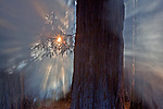 Sunburst through redwoods (Sequoia sempervirens), Sonoma County, California, USA<br /> Canon EOS 5D Mark II, EF16-35mm f/2.8L II USM lens, f/18 for .3 second, ISO 100