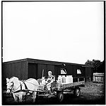 A dutch milk farmer with his dog on his wagon. Europe before the euro.