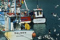 Europe/France/Bretagne/29/Finistère/Audierne: Retour de pêche