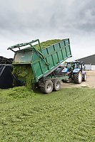 14-5-2021 Contractors tipping grass silage into a pit <br /> ©Tim Scrivener Photographer 07850 303986<br />      ....Covering Agriculture In The UK....