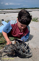 1Y47-325x  Beach - child examining horseshoe crab