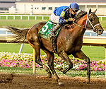 July 8, 2020: Shared Sense #5, ridden by Florent Geroux, wins the Indiana Derby on Indiana Derby Day at Indiana Grand Casino in Shelbyville, Indiana. Cady Coulardot/Eclipse Sportswire/CSM