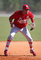 March 19, 2010:  Third Baseman Luis Mateo of the St. Louis Cardinals organization during Spring Training at the Roger Dean Stadium Complex in Jupiter, FL.  Photo By Mike Janes/Four Seam Images