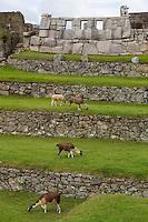 Peru, Machu Picchu.  Temple of Three Windows.
