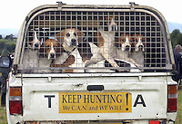 Foxhounds.