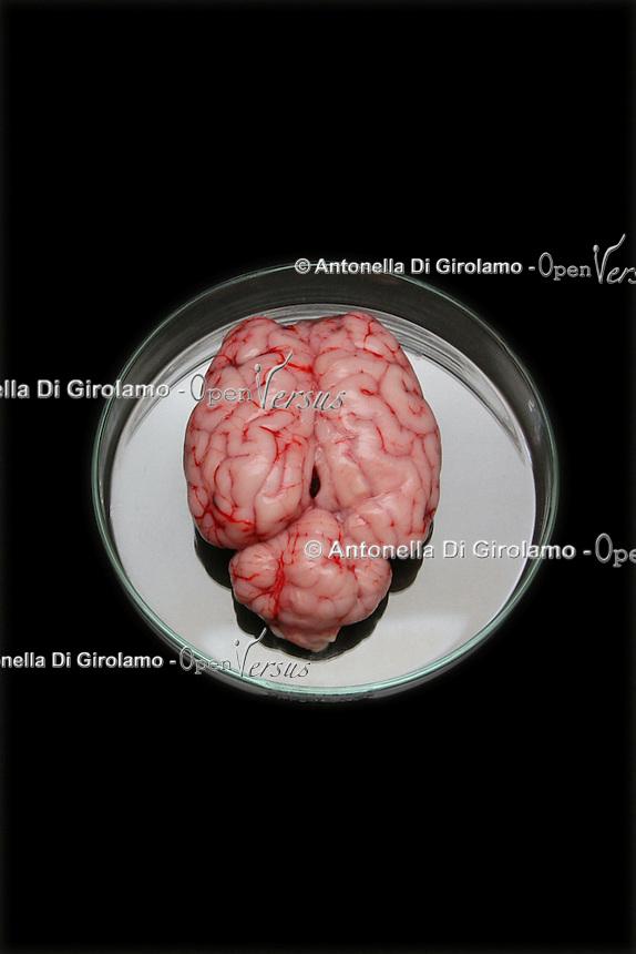 Cervello. Brain....
