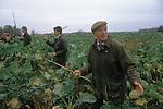 Pheasant Shooting, Lancashire England. Beaters.  The English Season published by Pavilon Books 1987